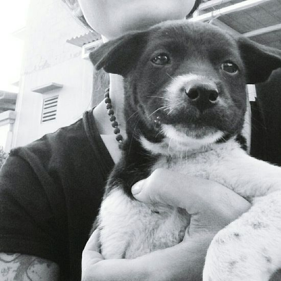 I'm not an activist; I don't look for controversy. I'm not a political person, but I'm a person with compassion. I care passionately about equal rights. I care about human rights. I care about animal rights. Ellen DeGeneres Ilovebalidog Hello World Dogs Of EyeEm Bali Blackandwhite Balidog Bali Dogs