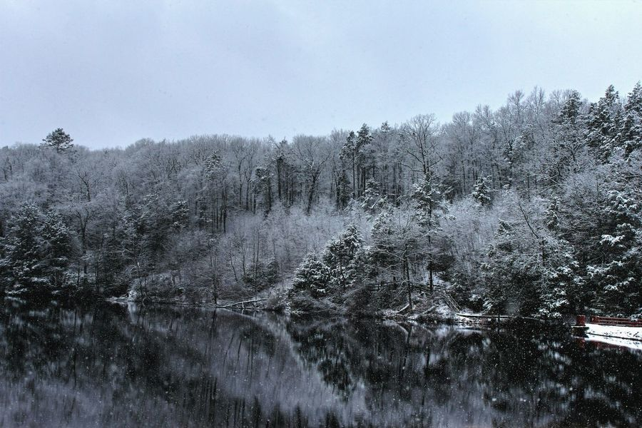 Frozen Pond Snow Day ❄ Nature Sky Water Drop Wet No People Scenics Outdoors Day Tree Beauty In Nature