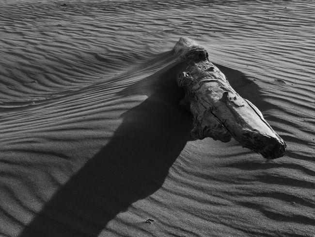 Drift wood log on Doran Beach at Bodega Bay, CA. Abstract Beach Black And White Driftwood Landscape Nature Ocean Outdoors Sand Sand & Sea Sand Dune Shadows