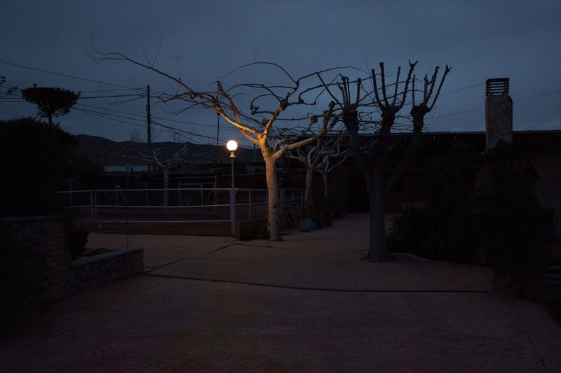 Illuminated bare tree against sky at night