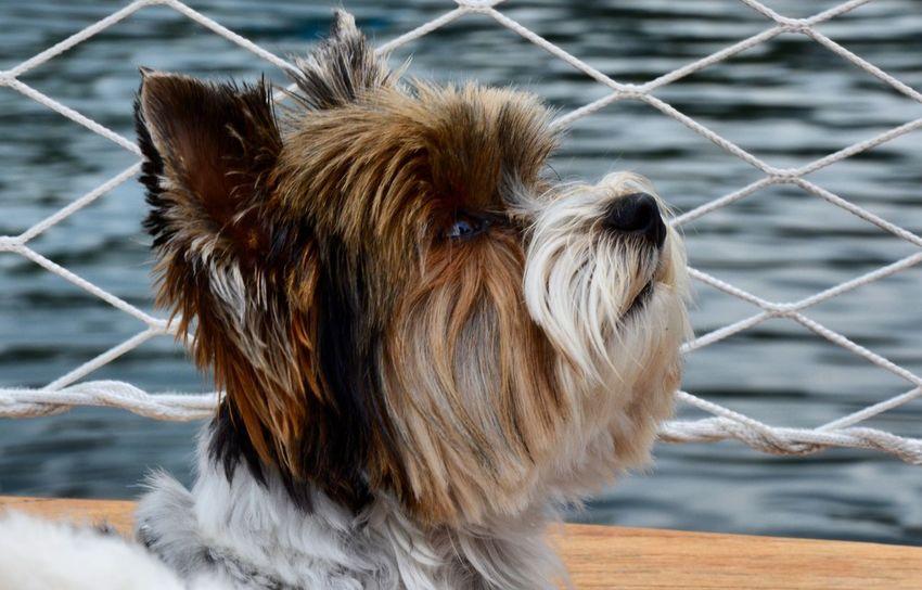 Dog❤ Boats⛵️ Photography Summer Summetime Switzerland Locarno Lake EyeEm Animal Lover Dogs Superphotoapp Superphoto First Eyeem Photo Photo