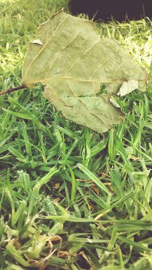 Do you really enjoy? Nature Green Good Day Filosofía Sencillez Earth One Life