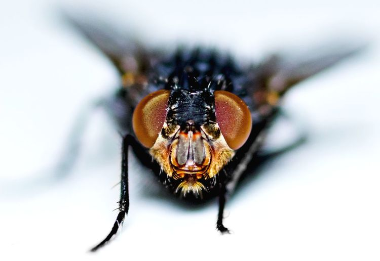 The Fly! Insect Animal Leg Close-up Housefly Macro Fly Eyeball Focus Animal Eye Extreme Close-up