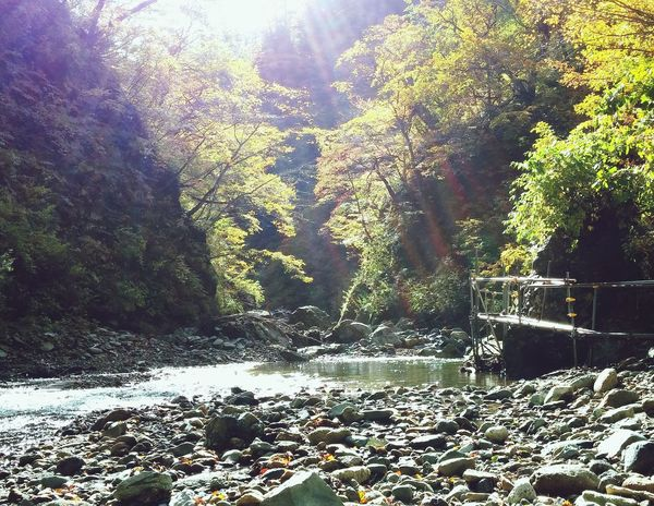 Word Nature Heritage Water Reflections 白神山地 Nature_collection