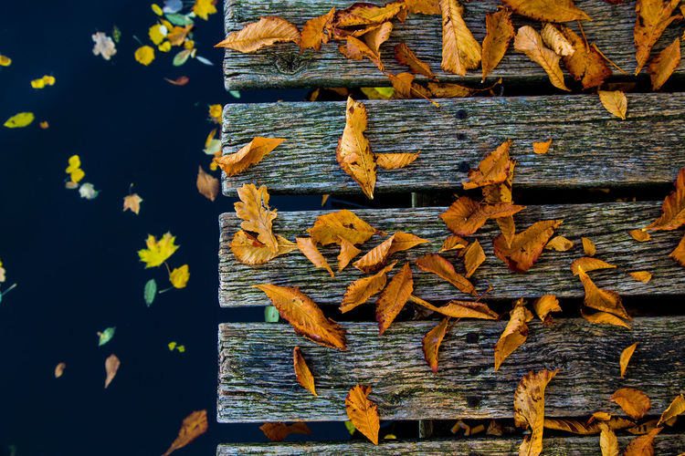 High angle view of yellow autumn leaves on wood