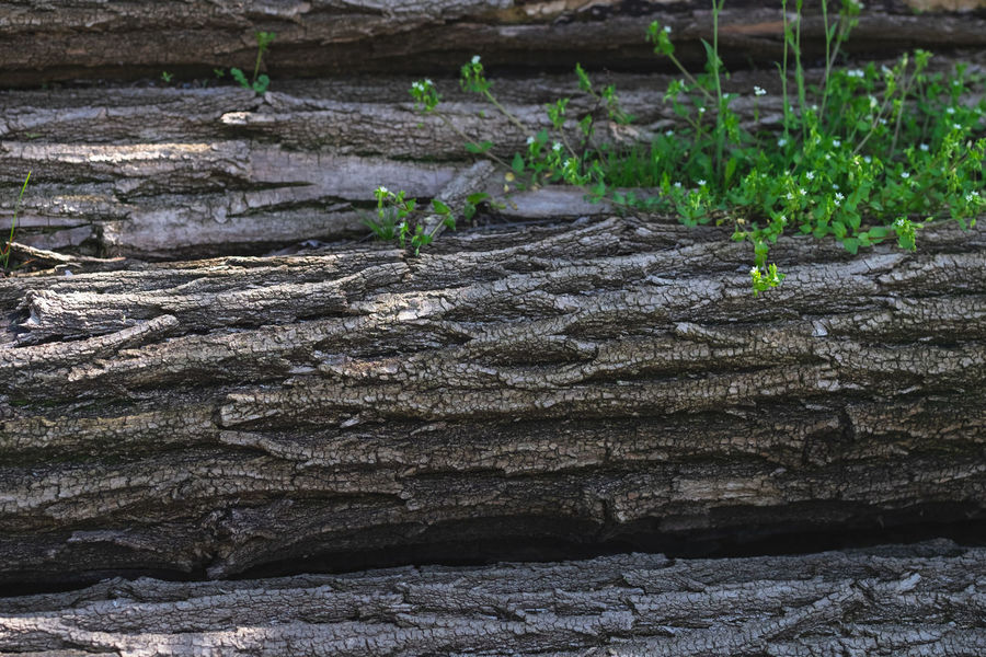 Wood Beauty In Nature Close-up Day Grass Green Color Growth Land Nature No People Outdoors Pattern Plant Textured