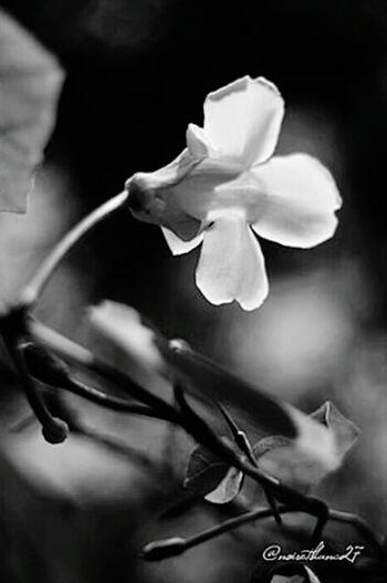 Flowerporn EyeEm Nature Lover Bestoftheday Naturelovers Des Fleurs Jolie Noiretblanc Blanco Y Negro