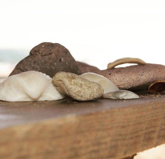 Las conchas 🐚 Del Mar No People Day