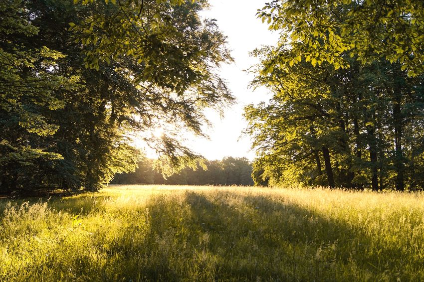 Sunlight behind tree Wanderlust Plant Tree Beauty In Nature Growth Tranquility Nature Sunlight Land Tranquil Scene Field Scenics - Nature No People Sky Day Green Color Landscape Outdoors Non-urban Scene Grass Idyllic