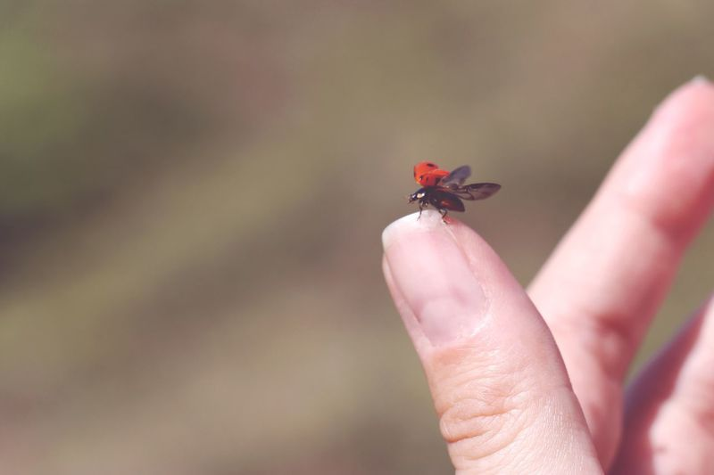 Cropped image of hand holding insect