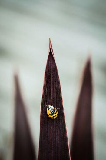 Yellow ladybug on leaf