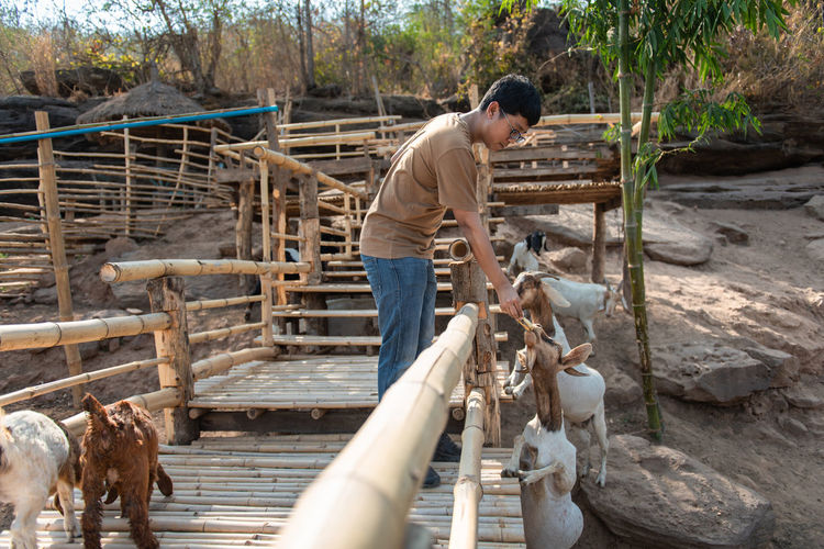 Animal Themes Animal Farm Farm Animal Eating Eating Backgrounds Nature Happy Holiday Enjoy Animals In The Wild Goat Goat Life Goat Eating Goat Farm Goat Feeding Men Outdoors Farmer Working Casual Clothing Standing One Person Mammal Livestock