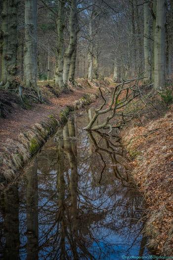 Nature walks,