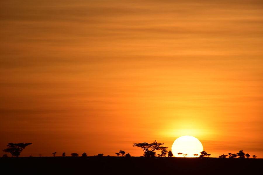 43 Golden Moments Africa Nature Orange Color Outdoors Sky Sunset Tanzania