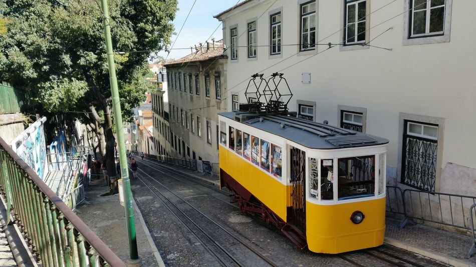 Battle Of The Cities Lisboa Lisbon Portugal Elevador Da Gloria Built Structure Transportation Architecture Building Exterior Tree Travel Railroad Track Mode Of Transport Public Transportation City Cable Car Day Outdoors City Life No People Public Transport Journey Paint The Town Yellow
