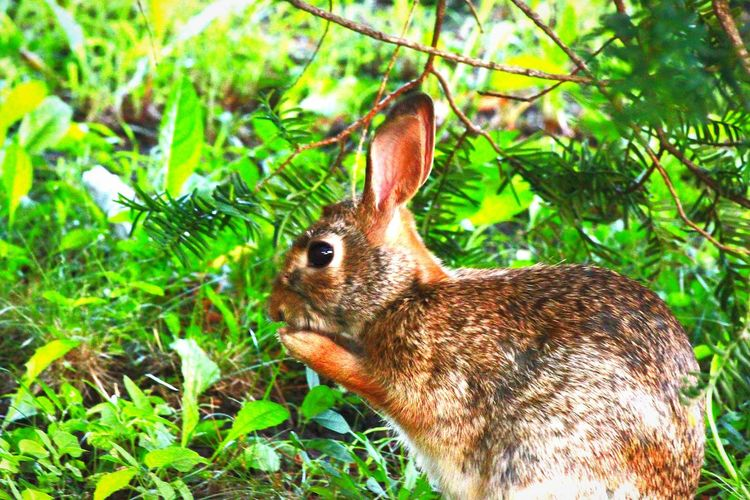 rabbit in the grass Perching Beauty In Nature Natural Pattern One Animal Wildlife rabbit Nature Close-up