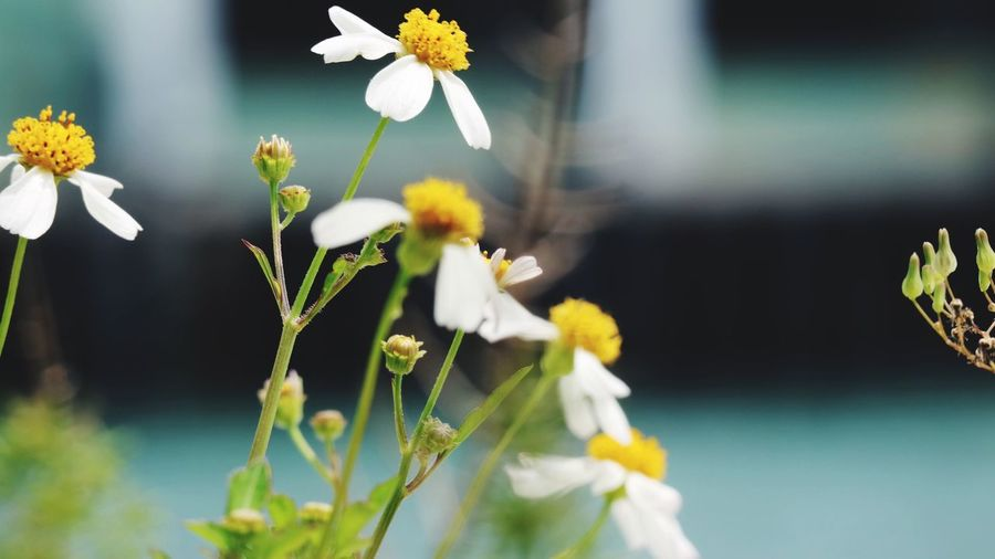 EyeEm Selects Flower Freshness Growth Close-up Nature White Color