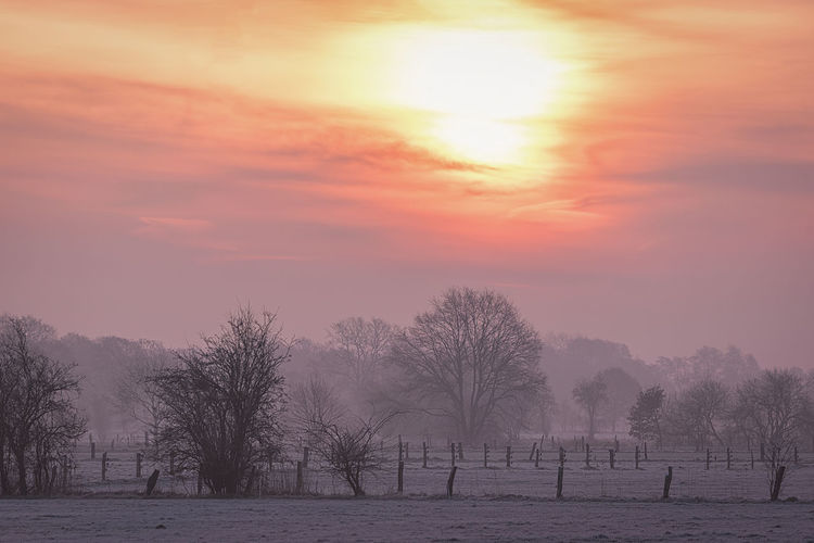 Fields near Hannover on a frosty morning Tree Plant Sky Beauty In Nature Sunset Bare Tree Scenics - Nature Tranquility Nature Tranquil Scene Environment Cold Temperature Fog Field Landscape No People Winter Snow Sun Outdoors Sunrise Frozen Hannover EyeEmNewHere Morning Sun