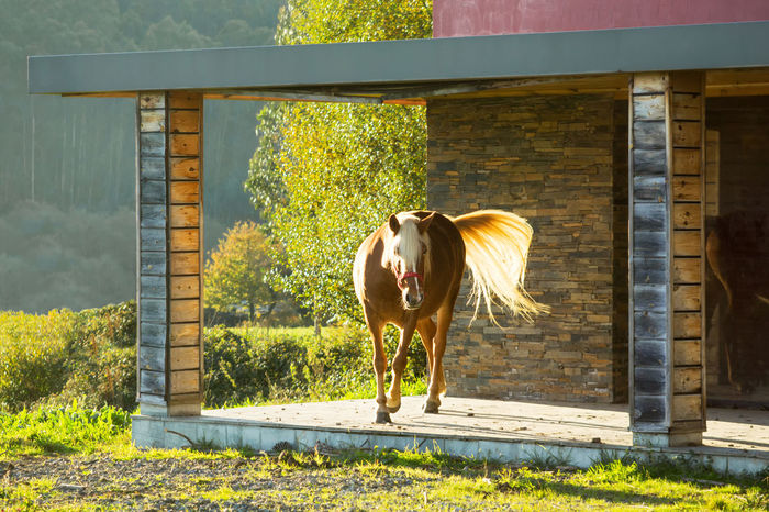 brown horse in chalet porch Animal Animal Themes Architecture Architecture Details Brown Horse Domestic Animals Horse House Entrance Mammal Modern House No People One Animal Porche Standing Sunlight