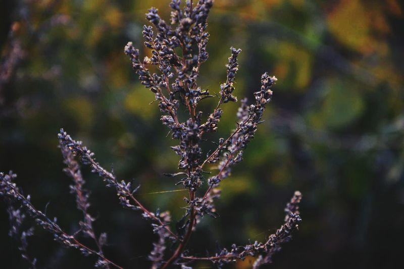 natura jest piękna, tylko trzeba trochę zacząć patrzeć Nature Roslin łąki Flower Close-up First Eyeem Photo