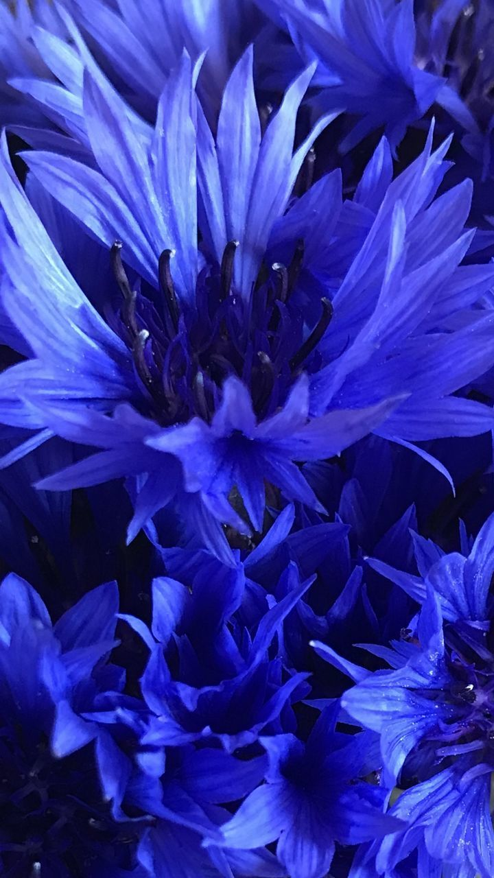 FULL FRAME SHOT OF BLUE PURPLE FLOWER