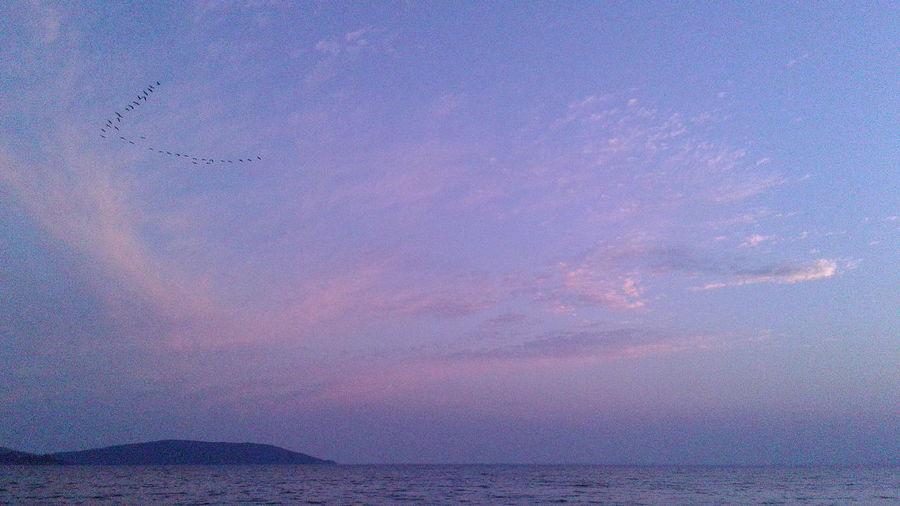 Clouds And Sky Pink Sky Birds Of EyeEm  Beach Of River