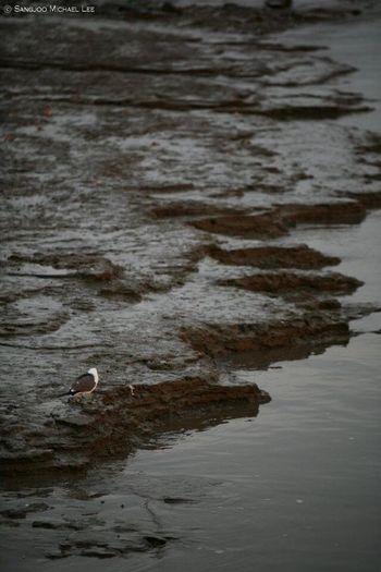 Birds SangjooLee Nature Feelimg lonely