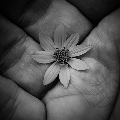 Taking Photos Check This Out Black And White Photography Black And White Flower Collection Flower Porn Eyemphotography Eye4photography  EyeEm Gallery Blackandwhite Black And White Flowerporn Black And White Collection  Black&white Fine Art Photography Monochrome Photography