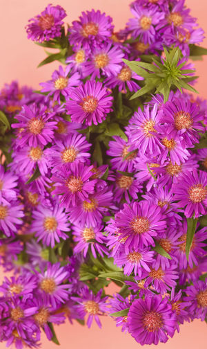Herbstastern,Germany Aster Astern Asterblüte Asternblüte Herbstastern Herbstaster Autumn Autumn colors Pink Pink Color Flowering Plant Flower Freshness Beauty In Nature Fragility Petal Plant Flower Head Inflorescence Close-up Growth Nature No People Purple Bunch Of Flowers