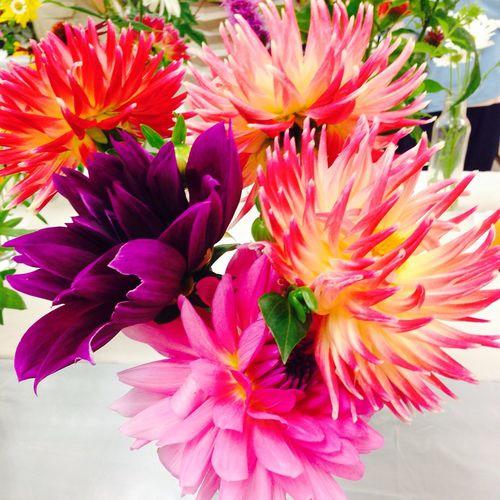 Purdy flurs Flowers Flower Show Minden Flower Show