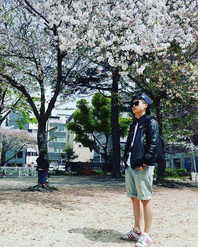 我家門前有櫻花🌸