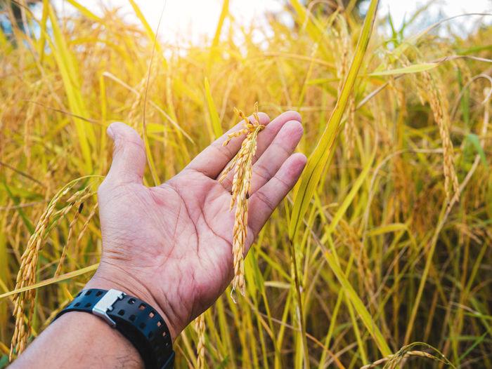 Close-up of man hand on grass