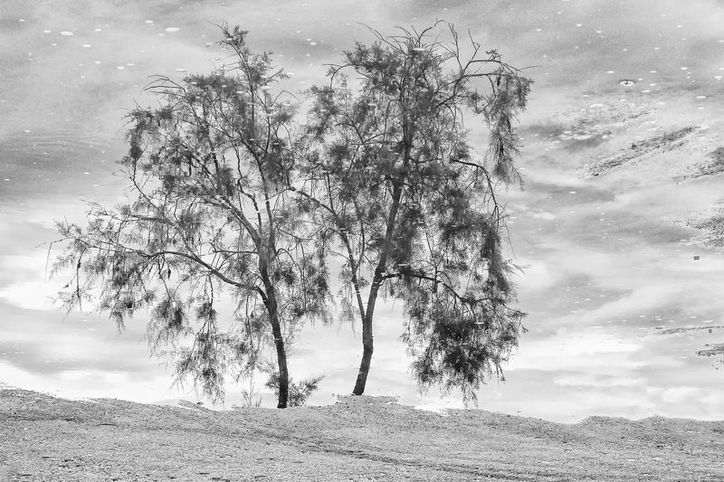 Reflection of a Tree Tree Plant Beauty In Nature Tranquility Environment Nature Landscape Reflection Reflections In The Water Water Puddle Ecology Bw Black And White Concept Backgrounds Conceptual Monochrome Beach Sandy Beach Scenics - Nature Copy Space Backdrop Wallpaper Fine Art
