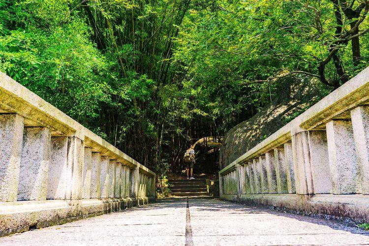 迷路 Tree Sunlight Architecture Built Structure Walkway