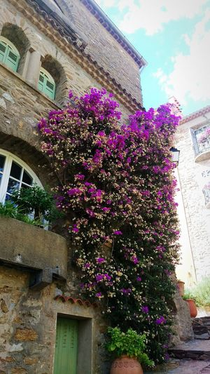 Taking A Trip Flower Architecture Building Exterior Built Structure Low Angle View Growth Window Fragility Freshness Pink Color Sky City Cloud - Sky Branch Day Flowering Plant Nature Blossom Outdoors Flowers