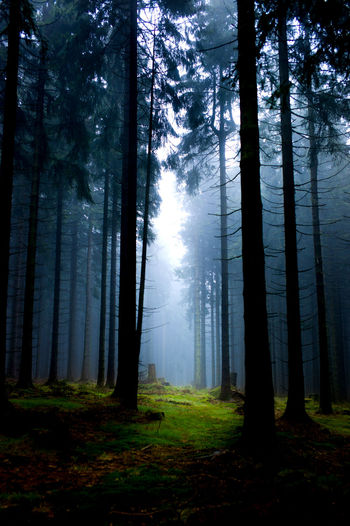 In the dark forest Beauty In Nature Day Fantastic Fantastic Exhibition Fog Forest Lifestyles Light Magic Moody Mysterious Mystery Nature No People Outdoors Tree Tree Area Tree Trunk WoodLand Woods