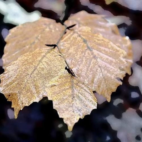 Nature Photography Naturelovers Fall Colors Fall Leaves