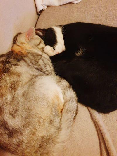 Liebe-love Pets