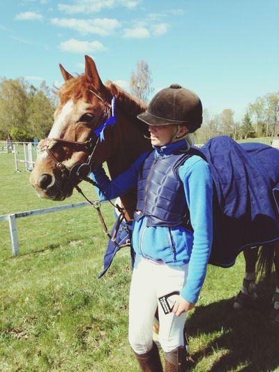Horse Winner Showjumping Best