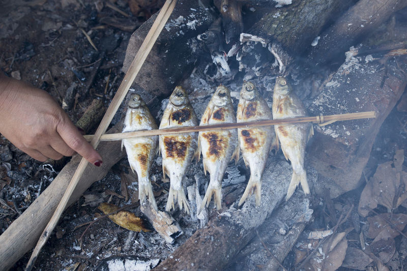 Cropped image of hand preparing fish on campfire