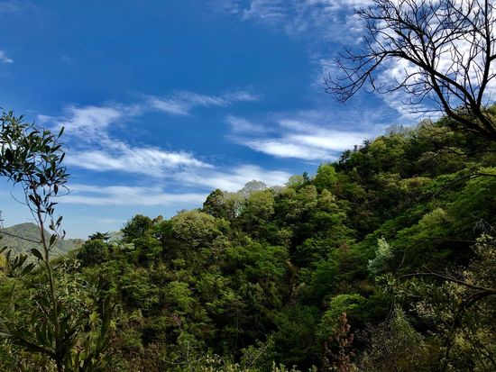 Beautiful Scenery : Blue, White and Green. (180413-180513) Plant Tree Sky Cloud - Sky Low Angle View Growth Nature Beauty In Nature Scenics - Nature Plant Part Lush Foliage Foliage Green Color Tranquility Day Outdoors No People