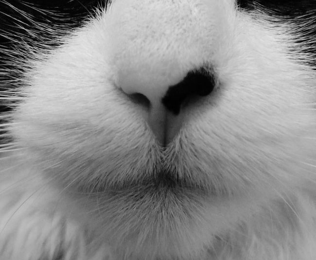 Fancypants Kittynose Meow Meow Meow Purr Cats EyeEm Cats Kittykisses Check This Out Petlover