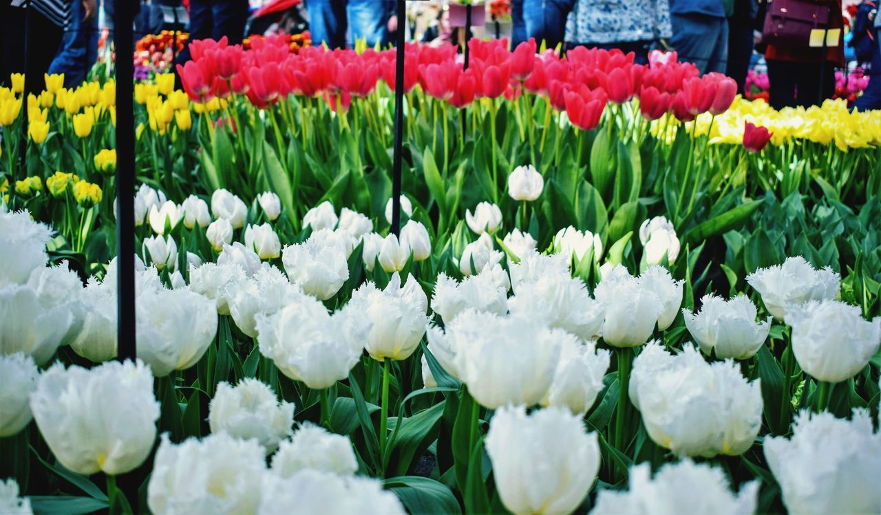 flower, freshness, fragility, beauty in nature, nature, tulip, for sale, flower head, petal, retail, flower market, abundance, market, flower shop, arrangement, white color, variation, blooming, bouquet, day, multi colored, backgrounds, outdoors, growth, no people, plant, springtime, close-up, florist