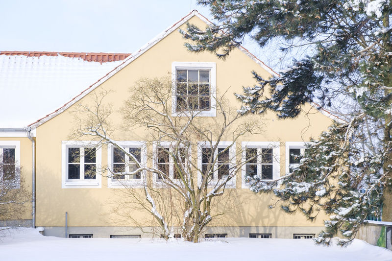 Snow covered tree by building