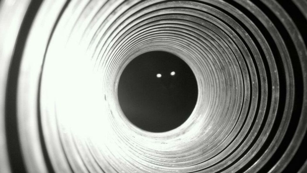 Bailey kitty getting his picture taken through a slinky in 2012. Pspauly63 Kittylove