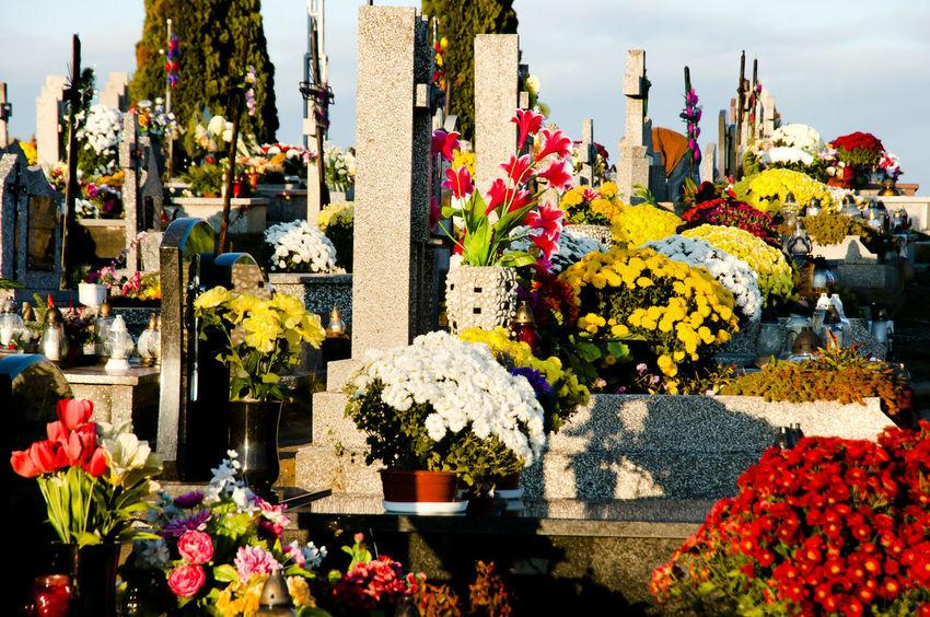 Flowered Graves on All Saints Day Cemetery Flowered Poland All Saints  All Saints Day Cemetary Flower Arrangement Graves Leżajsk Multi Colored