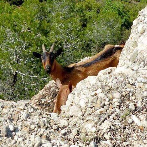 One Animal Mammal Animal Themes Animal Domestic Animals Vertebrate Pets Domestic Land Day Nature Rock Tree Animal Wildlife No People Rock - Object Plant