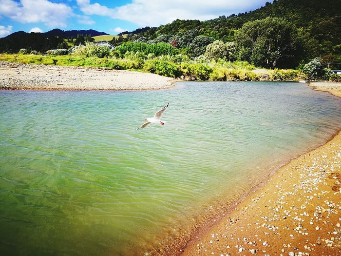 Bird Animals In The Wild Water Animal Wildlife Animal Themes One Animal Water Bird Outdoors Nature Beauty In Nature Sky No People Day