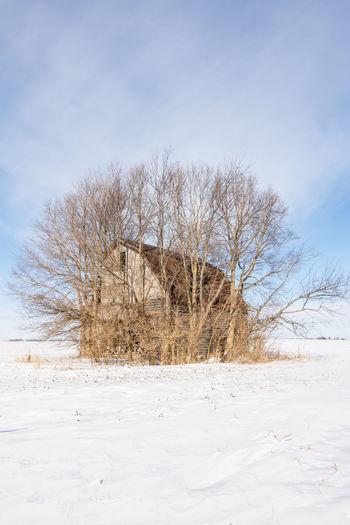 Bare Tree On Snowy Field Against Sky