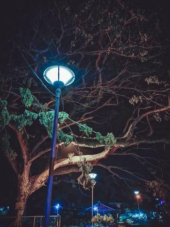 Harry Potter Vibe Zamboanga Philippines Street Streetlights Nightphotography Night Nightscape Photographylife Nightowl Urbanjungle Citylife Huaweip20pro Huaweimobileph Phoneproducedcontent PhonePhotography Lightroom Canopy Of Trees Illuminated City Lighting Equipment Sky Close-up